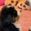 子イヌがちょこんと座っていた。目の前にはでっかい犬がいる。どうなるの? → こうなった…