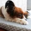 シニア犬のいるインテリア|大理石柄ペットマットと介護ベッド
