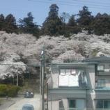 『さらに大年寺の桜』の画像