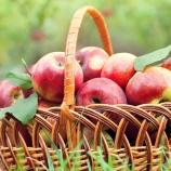 『揚げてないからヘルシー!Bare Fruitのアップルチップスが爽やかで美味しい。【iherb商品レビュー】│アイハーブセレクト』の画像