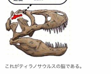 【悲報】ティラノサウルスさん、研究が進む度に弱体化