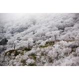『霧氷』の画像