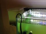 『マシジミフィルター再起動[リブート](濁った水槽に「マシジミ」を迎え入れる3)』の画像