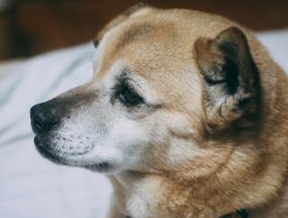 近所のAさんが犬をトラックの荷台から落として後遺症を残してしまった。それをBさんちの娘(トリマー)が面と向かって周囲が引くくらいの罵りの言葉を浴びせてたんだが…