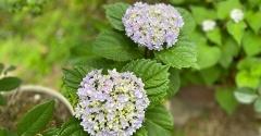 *明日から6月。初夏の花が咲いています^^