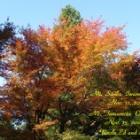 『三瓶山と玉峰山の紅葉』の画像