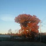 『今日も初冬の青空』の画像