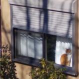 『現場猫(3)』の画像