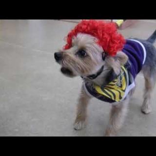 犬の幼稚園 アットホームblog