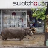 『大洪水で動物たちが射殺』の画像