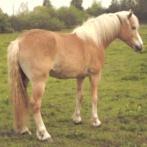 戦国時代の馬はポニー並みだったか問題という永遠に決着しない難題