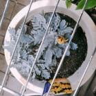 『《花騎士》 花騎士団長のド素人園芸日誌【5】』の画像