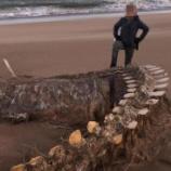 『【ネッシー伝説】スコットランドの海岸に謎の骨が打ち上げられる』の画像