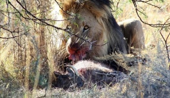 """""""殺しのスイッチ""""が入ったら止まらない…動物界の猟奇的なハンターたち"""