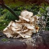 『フォト短歌「舞茸に詠う」』の画像