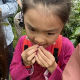 『子育ては学びのプロデュース。ここコーヒー、又吉コーヒー農園を体験する。収穫から焙煎まで奇跡の2時間半。』の画像