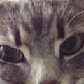 【ネコ】 机に向かっていると猫がやってきた。ちゃんと勉強してるかにゃ? → 猫は本にこうなります…