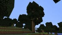 北々地方にツリーハウスを作る