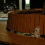 『野島崎』の画像