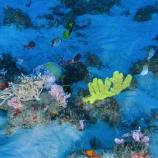 『アマゾンのサンゴ礁が危機』の画像