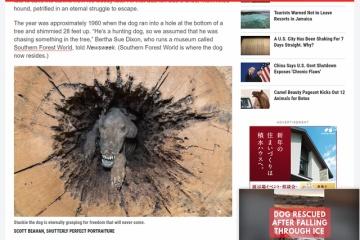 ミイラ化した犬が伐採した木の中から発見される・・・どうしてこうなったのか!?