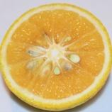『国東の食環境(271)熟成カボス』の画像
