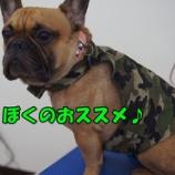 『8月のおすすめ商品 coolmeひんやりボディークーラー』の画像