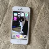 『iPhone5が突然起動不可に! DFUモードで復旧したという話』の画像