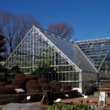 『冬の東京都薬用植物園と東大和南公園、庭のメジロ』の画像