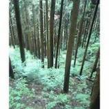 『探訪奥多摩の自然5「心地よい風」』の画像