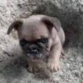 子イヌが庭で「穴」を掘っていた。ちょっと休憩だワン → すると兄弟子犬はこうします…