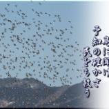 『鳥に聞け!』の画像