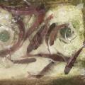 令和3年9月25日(土) 鯛