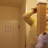 『猫の爪とぎ柱の修理。麻縄の巻きなおし。』の画像