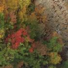 『紅葉時雨(もみじしぐれ)~山田温泉松川渓谷~』の画像