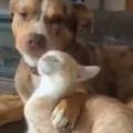 犬がネコを「べろべろ」舐めまくっていた。お前は可愛いなぁ~! → 行き過ぎた愛情はこうなります…