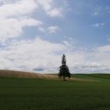『【北海道ひとり旅】富良野・美瑛の旅『クリスマスツリーの木』田園風景に凛と立つ一本の木』の画像