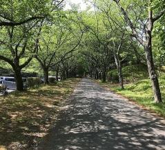 松阪市森林公園は手軽にバーベキューやキャンプができる!徹底的に詳しくブログで紹介。