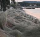 【ギリシャ】まるでホラー映画、大量のクモの巣が町覆う