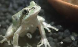 日本最大のカエル動物園がオープン 静岡