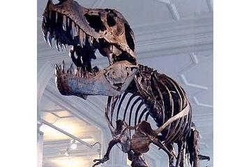 【悲報】ティラノサウルスの評価がまたしても下がる・・・走る速さは最高でも27キロ前後