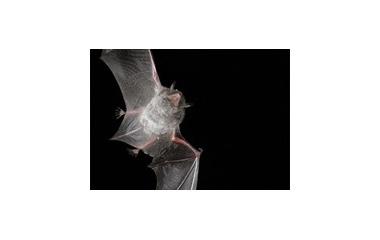 『モモの節句』の画像