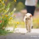 【ギリシャ島猫旅~番外編③〜】花と猫vol.2