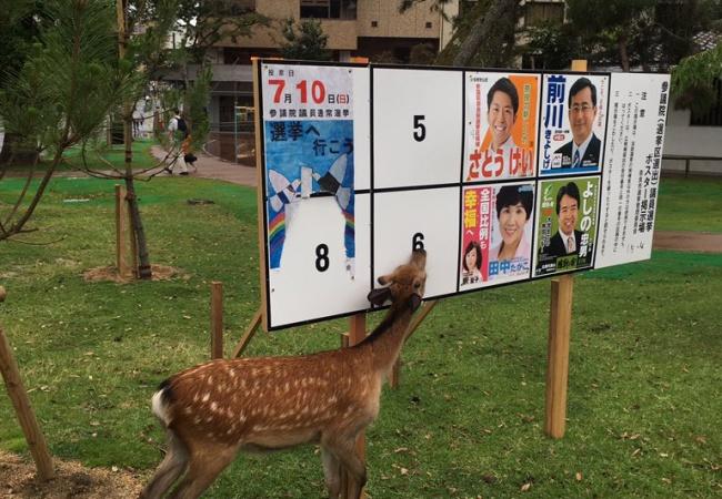 奈良で堂々と公職選挙法違反が行われるwwwwwww