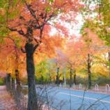 『三色街道(2015年11月24日)の紅葉が見頃!やらかな朝日と紅葉のコラボ、今が一番見頃です!~紅葉実況とバリアフリー事情~』の画像