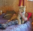 川の字の真ん中で寝るのは…子ライオン