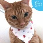一日一猫【いちねこブログ】