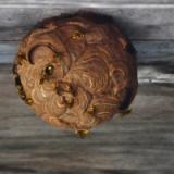 スズメバチの巣にスプレー噴射した結果・・・・