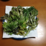 『山菜の天ぷら実況 他の料理もありまする』の画像