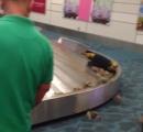 【動画】空港でカニの大群が手荷物から逃亡する事案が発生
